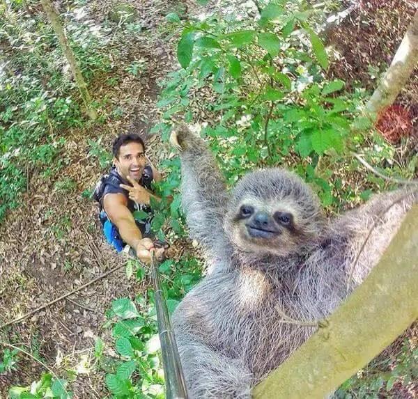 Luiaard bewijst nut selfiestick