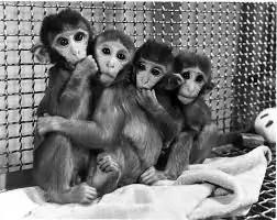 Wonen in een Spiegelpaleis en het aapje op het draadmodel