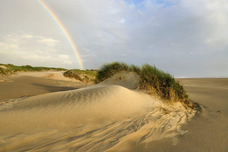 Stikstof, een bedreiging voor het ecosysteem in de duinen