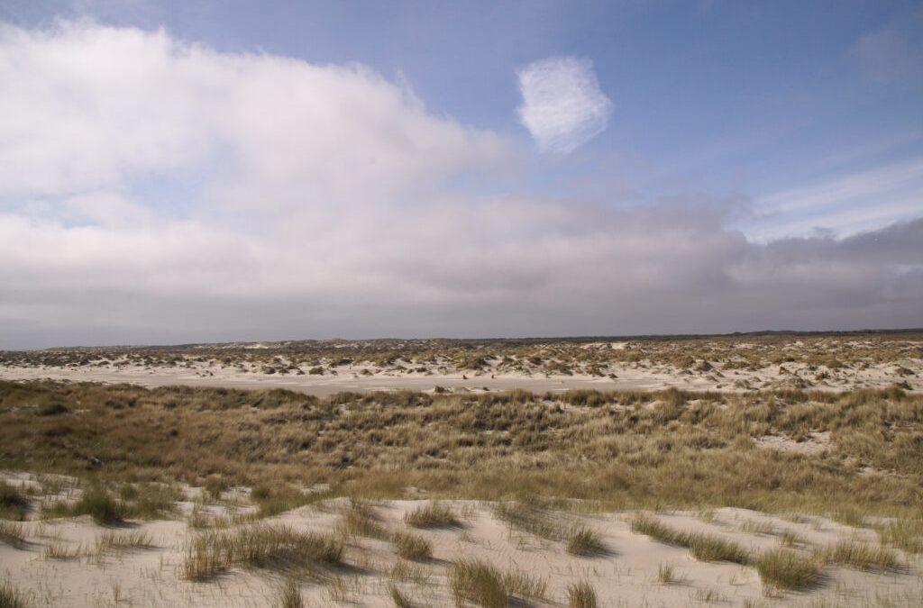 Het project het Groene Strand is begonnen: het Kennemerstrand als voorbeeld.