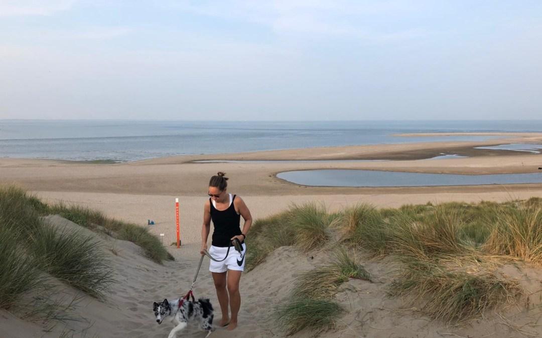 Met je hond naar de kust? Zo houd je rekening met de natuur.