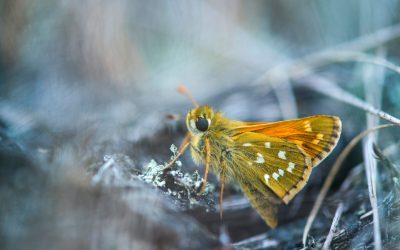 Kommavlinder door Nico van Kappel