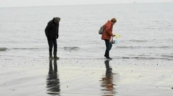 Speurwerk op strand Neeltje Jans - Theo Willemstein
