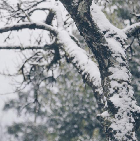 Trên những cành cây tuyết giăng kín - Ảnh Tùng Lâm