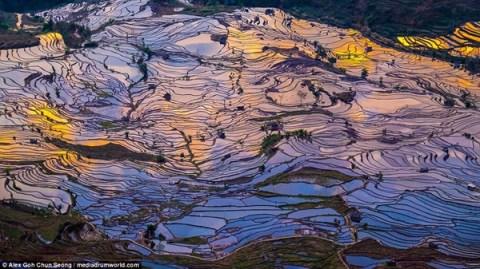 Chiêm ngưỡng ruộng bậc thang mùa nước đổ ở Trung Quốc đẹp như tranh