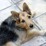 Dog Pet Canine Animal Lying Fur  - myshoun / Pixabay