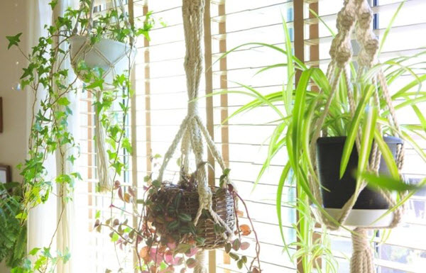 how to create green spaces by hanging plants in your condo