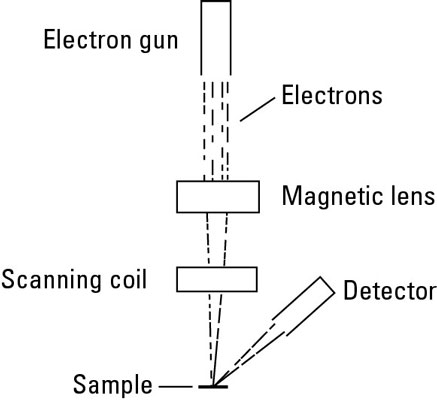 See At The Nano Level With Electron Microscopy Dummies