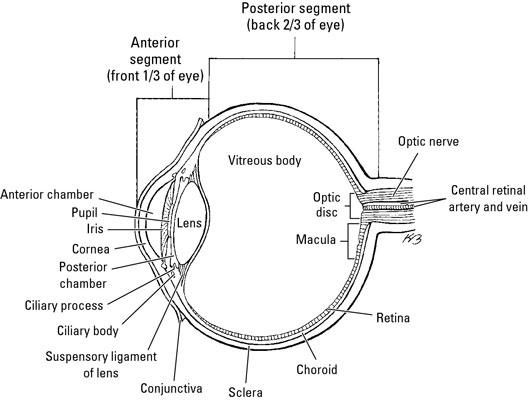 Three Chambers Of The Eye - slideshare