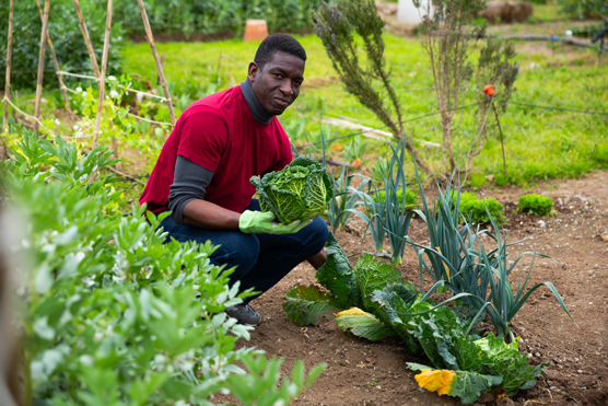 Vegetable Gardening For Dummies Cheat Sheet Dummies