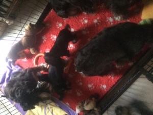 ines puppies 25_11_15