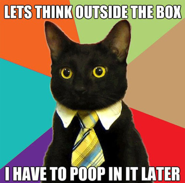 think outside the box, cat, internet meme, poop, shit