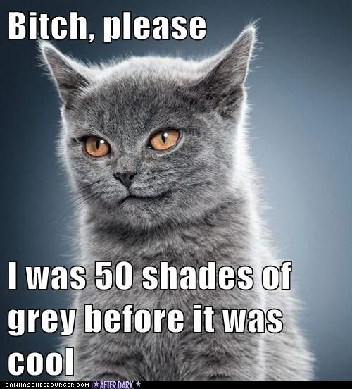 50 shades of bloggkatt