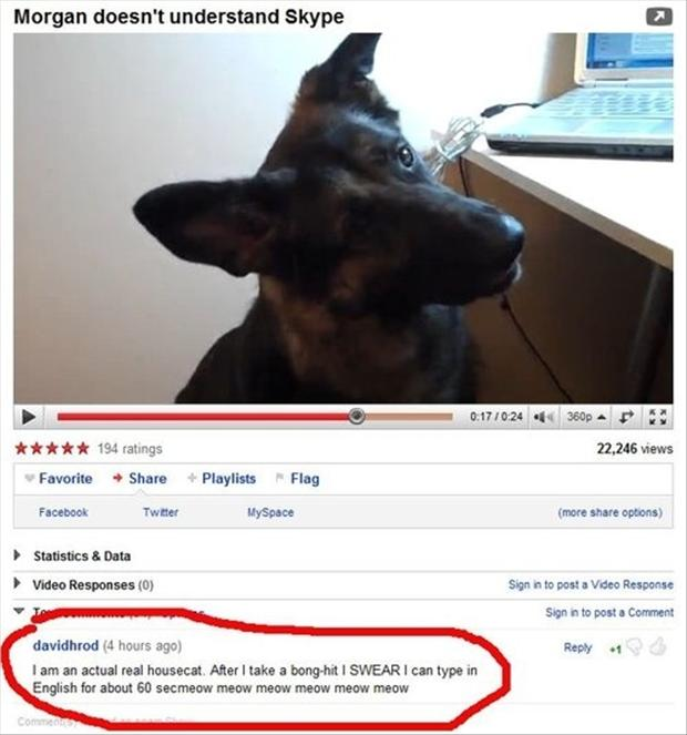 dumb dog, funny youtube comments