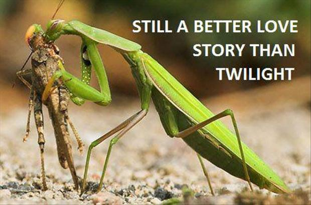 preying mantis bugs, a better love story than twilight