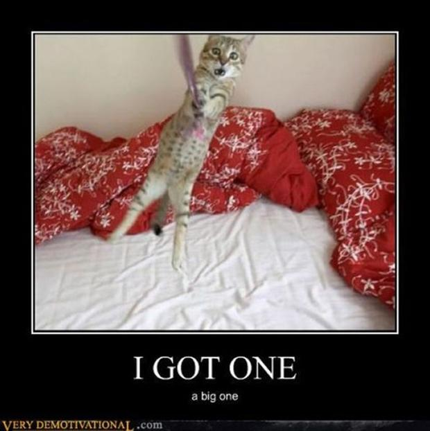 funny demotivational posters, cats