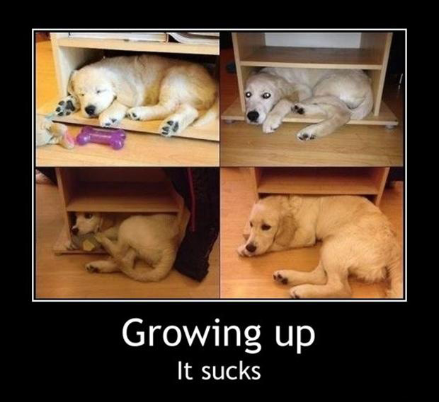 funny demotivational posters, dogs