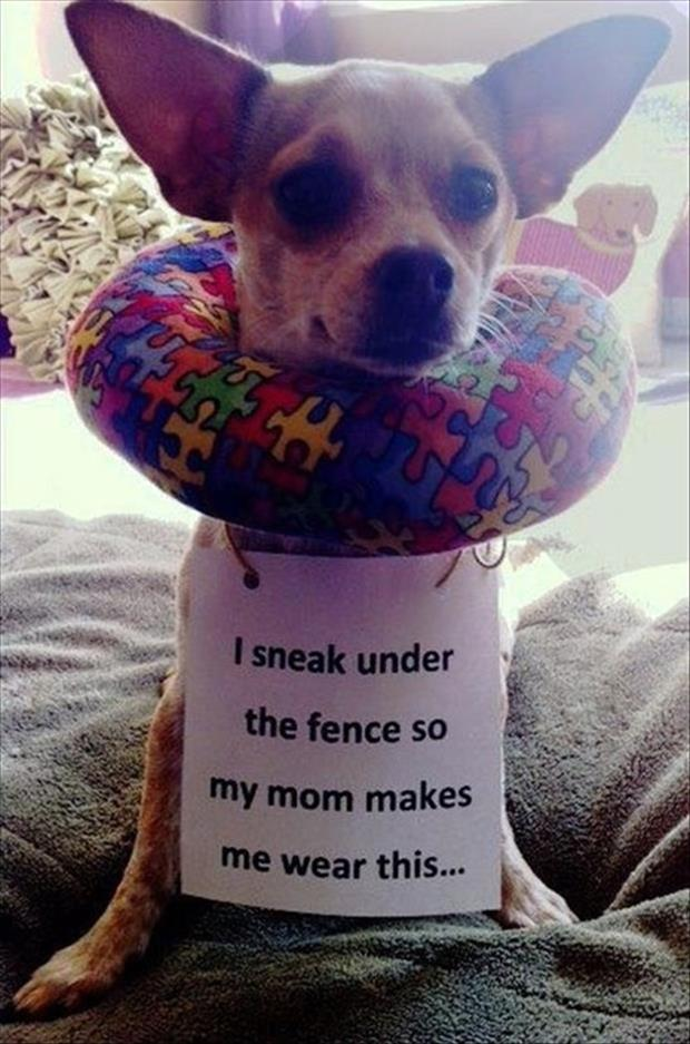 animal pictures with captions, dumpaday (19)