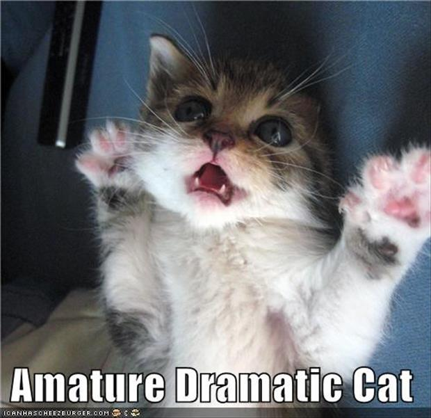 funny dramatic animals (8)