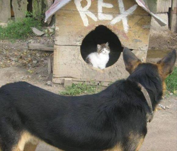 funny animals (10)
