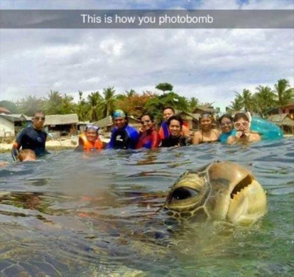 this is how you photobomb