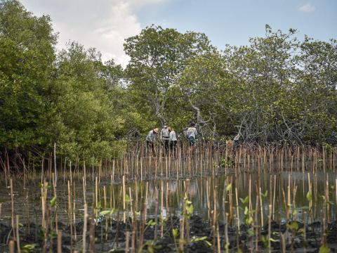 Ekosistem Mangrove Pacu Penurunan 10%–31% Emisi Tahunan