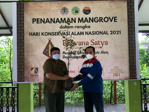 Peringati Hari Konservasi Alam, Pertagas Gelar Kegiatan Pelestarian Ekosistem Mangrove di Kaltim