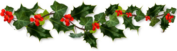 holly-border