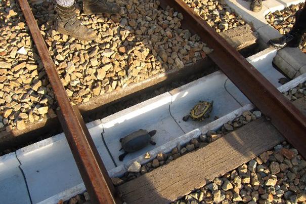 turtle-tunnel-train-track-safety-japan-railways-1