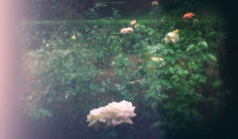 3dp-camera_flowers-jpg-980x0_q80_crop-smart-2