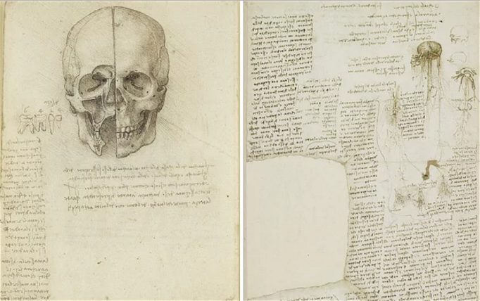 Da Vinci'nin mantar panosundan (Fotoğraf: The Queen's Gallery, Buckingham Sarayı)