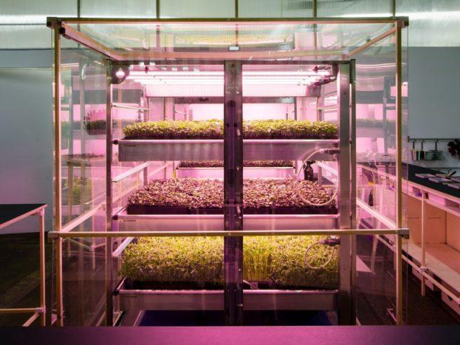 ikea-space-10-indoor-farm-designboom-2-818x614