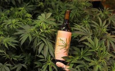 marijuana-wine-4