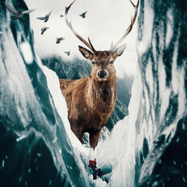 giant-animals-mani-photography-7