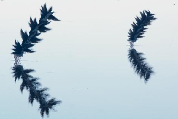 moving-birds-flight-paths-patterns-sky-16.adapt.945.1