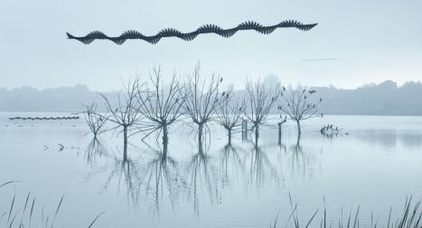 moving-birds-flight-paths-patterns-sky-17.adapt.1900.1