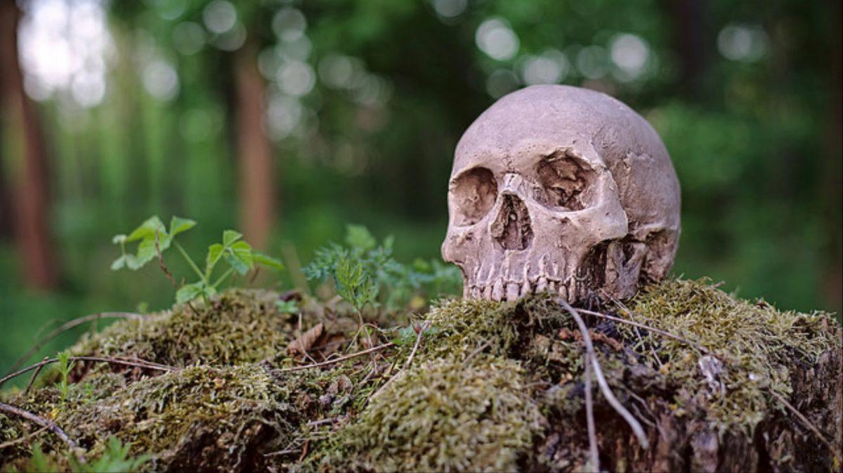 Washington 'ölüyü gübreye dönüştürmeye' izin veren ilk eyalet olma yolunda - Dünya Halleri