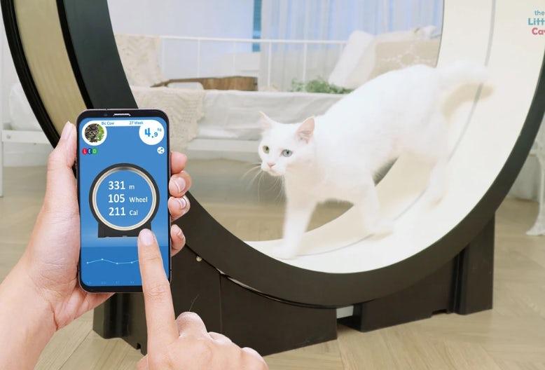 Şişman kediler için koşu bandı: Little Cat - Dünya Halleri