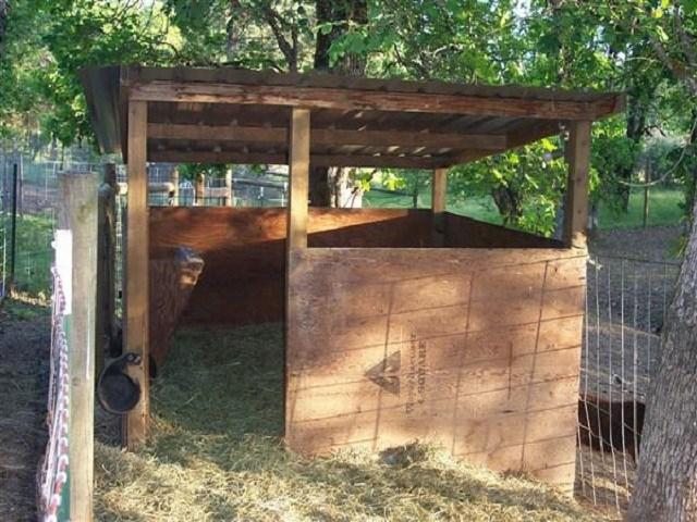mini horse shelter