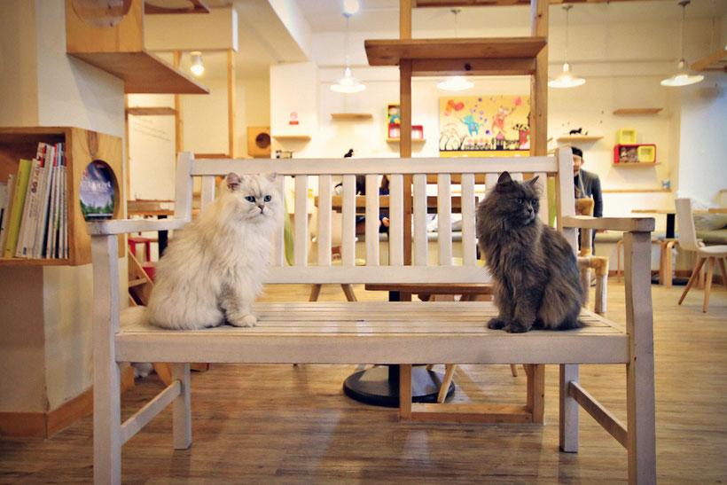 day-in-a-cat-cafe-in-Seoul