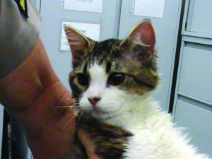 The FBI created its first database to track animal abuse crimes. The information gathered will help stop cases like this one from Jan. 9, when a cat was found in Los Angeles with electrical-tape bound feet.