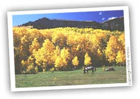 durango colorado climate in the fall - aspens
