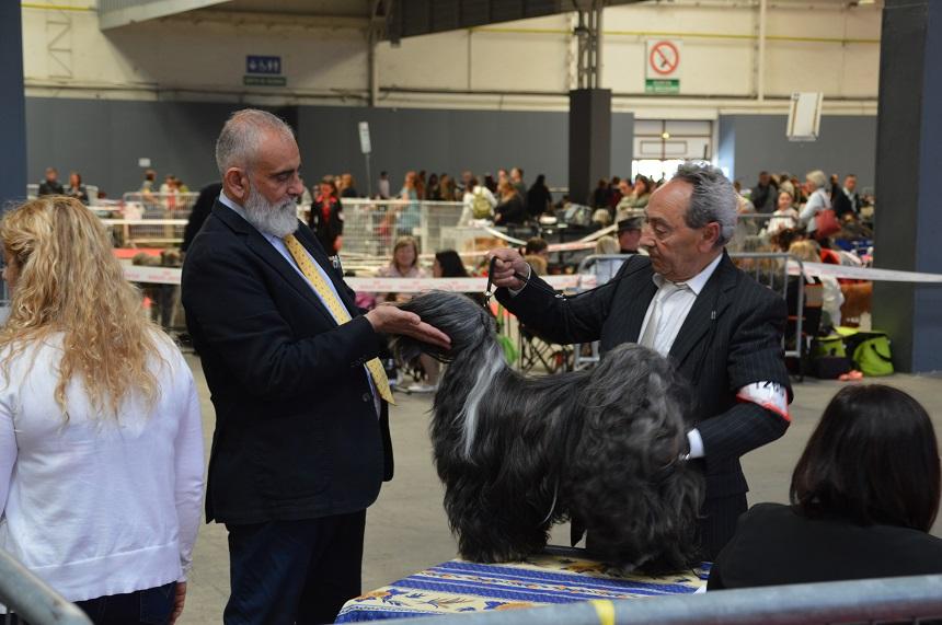 exposition canine internationale de marseille le 08 mai 2017 Juge : M. CONDO Pietro Paolo