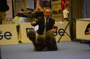 exposition de Genève Italie le 16 novembre 2018, Feel good des sources du salaison champion de la Méditerrané