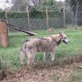 Saint Francis Wolf Sanctuary