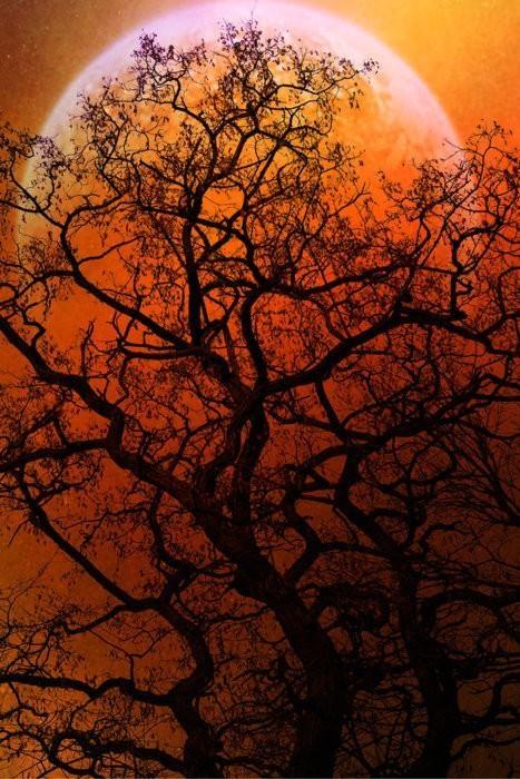 trees, 5 (2)