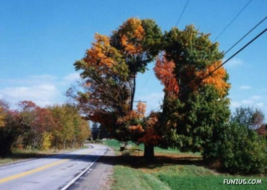 trees, unusual, funzug, 2