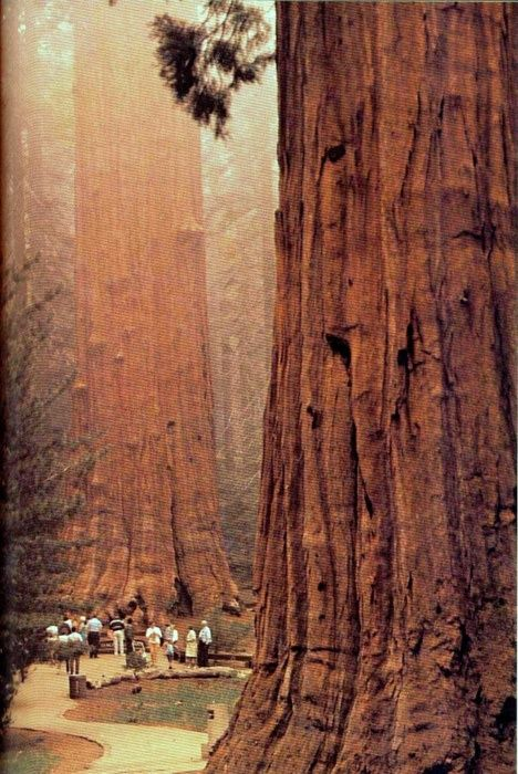 California's Sequoia national park.