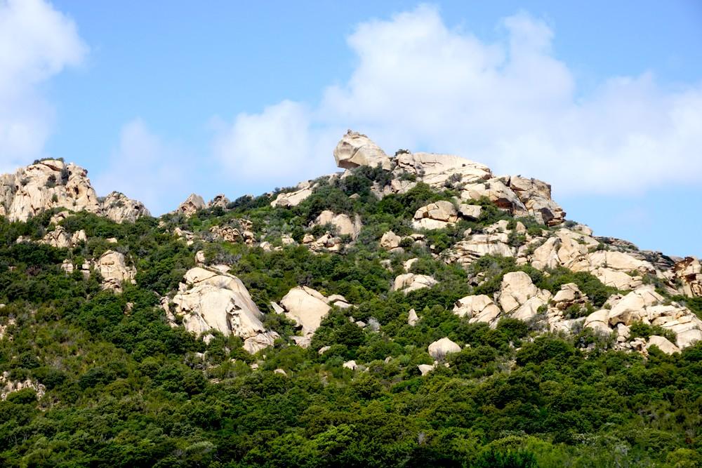 LION DE ROCCAPINA CORSE CORSICA PROPRIANO NATURE BLOG VOYAGE TOURISME 05