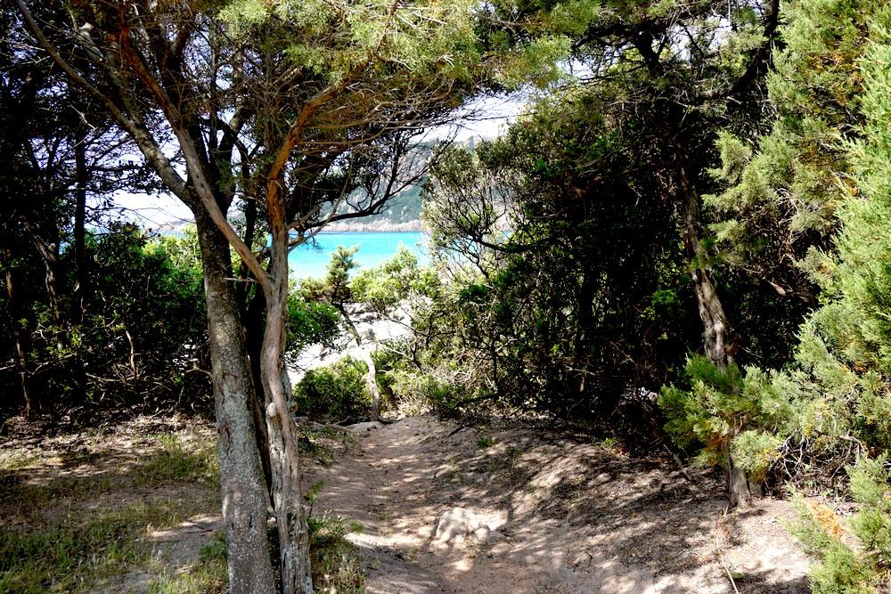PLAGE DE ROCCAPINA LION CORSE CORSICA PROPRIANO BLOG VOYAGE TOURISME 01
